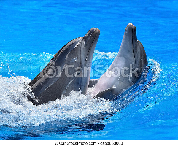 Couple of dolphin in blue water. - csp8653000