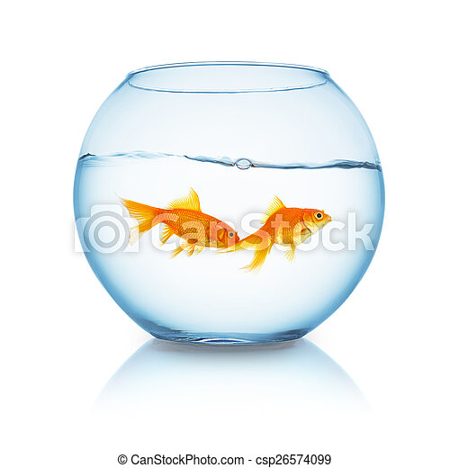 couple of goldfishes in a fishbowl - csp26574099