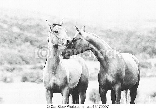 Couple of horses on a meadow, drawing imitation by a pencil - csp15479097