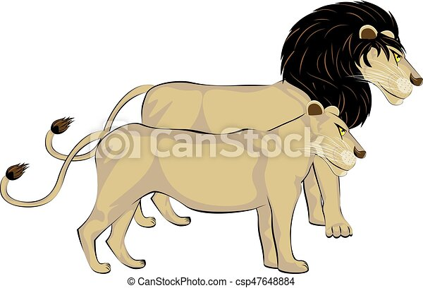 Line Drawing Of Lion : Couple of lions male and female standing cartoon vector