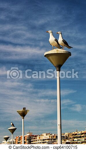Couple of seagulls perched on a lamppost in the harbor - csp64100715