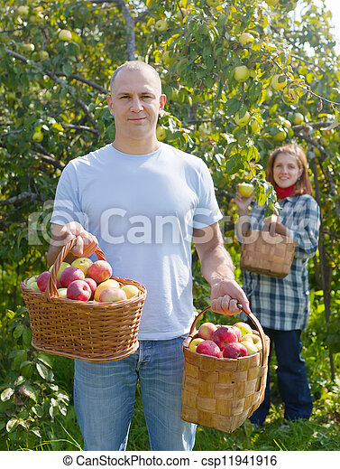 Couple Picking Apples Man And Woman Picks In The Stock