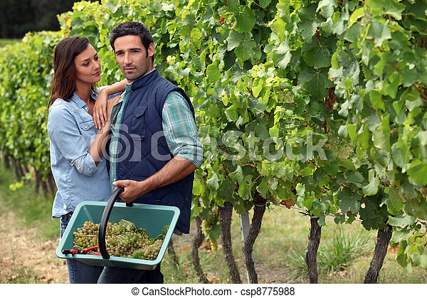 Couple picking grapes - csp8775988