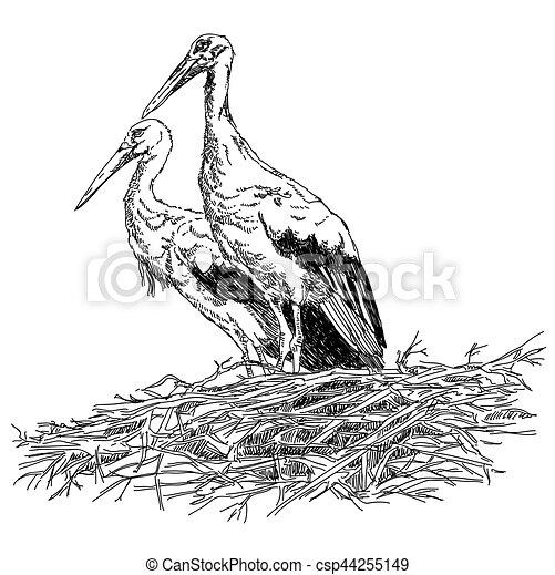 Couple vecteur nid illustratoin cigognes crayon nid dessin vecteur cigognes couple - Cigogne dessin ...