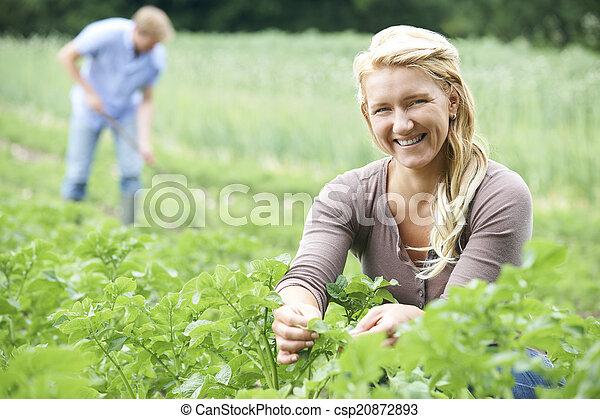 Couple Working In Field On Organic Farm - csp20872893