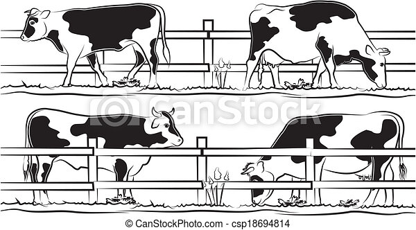 cow and bull on the meadow - csp18694814