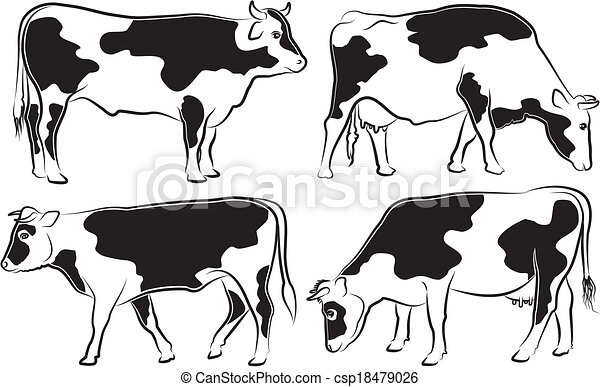 cow and bull outlines black and white cattle grazing cow and