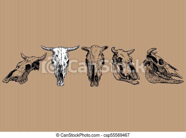 Cow And Bull Skull Set