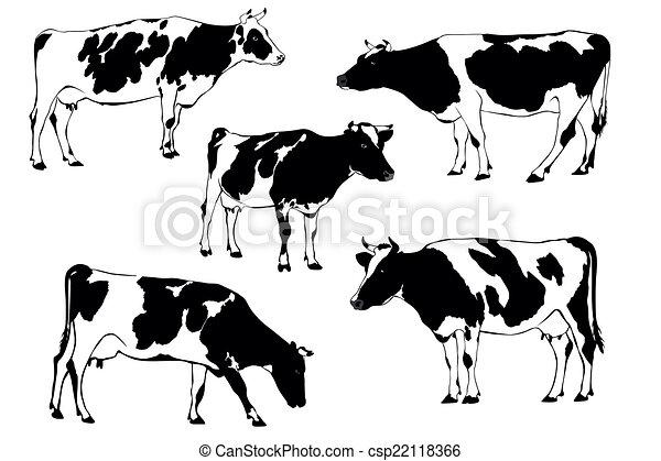 cow - csp22118366