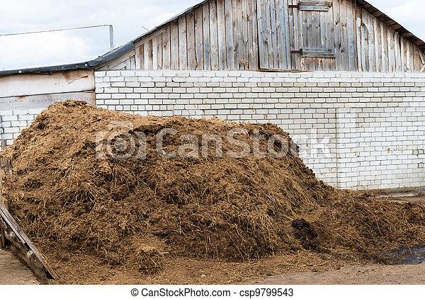 Cow dung as a natural fertilizer - csp9799543
