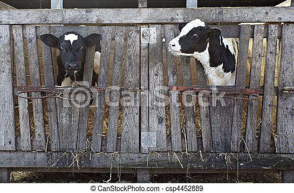 cow farm agriculture bovine milk - csp4452889
