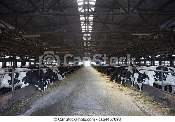 cow farm agriculture bovine milk - csp4457093
