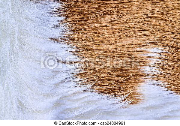 Cow fur (skin) texture. - csp24804961