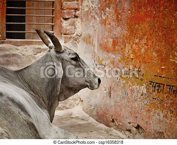 Cow in a indian city - csp16358318