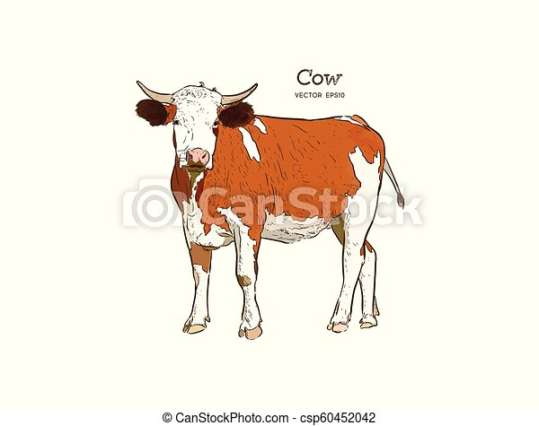 Cow in graphic style, and inscriptions, drawing illustration by hand. - csp60452042