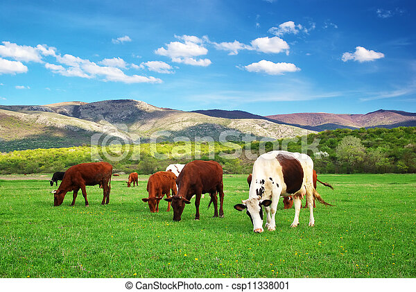 Cow in green meadow - csp11338001