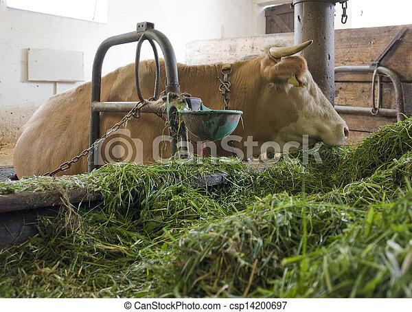 Cow Inside Of A Barn