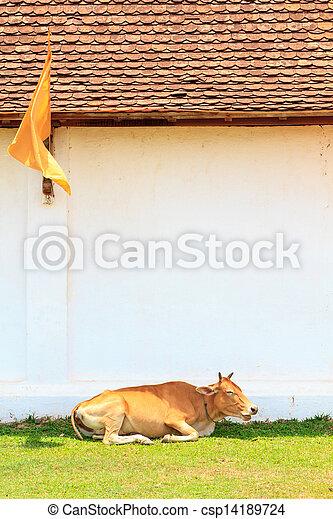 Cow on grass - csp14189724