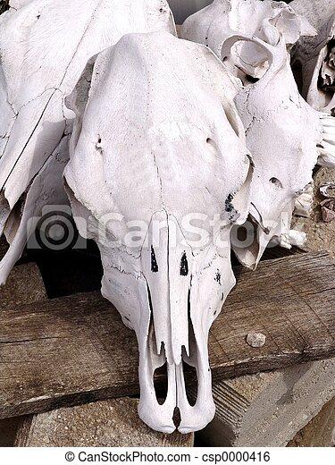 Cow Skull - csp0000416