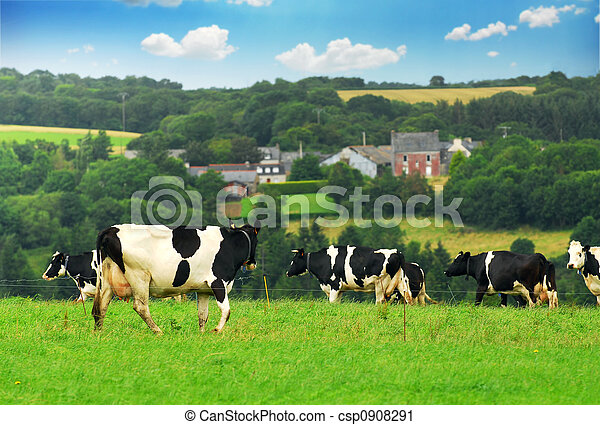 Cows in a pasture - csp0908291