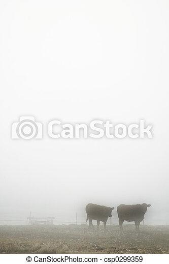 Cows in Fog - csp0299359