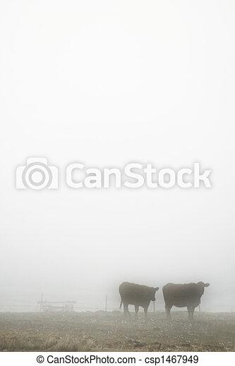 Cows in Fog - csp1467949