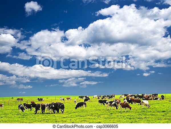 Cows in pasture - csp3066605