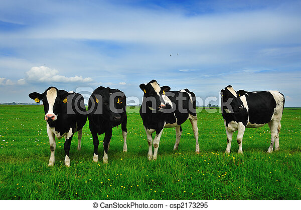 cows on farmland - csp2173295