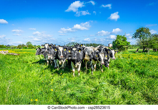 Cows on the country - csp28523615