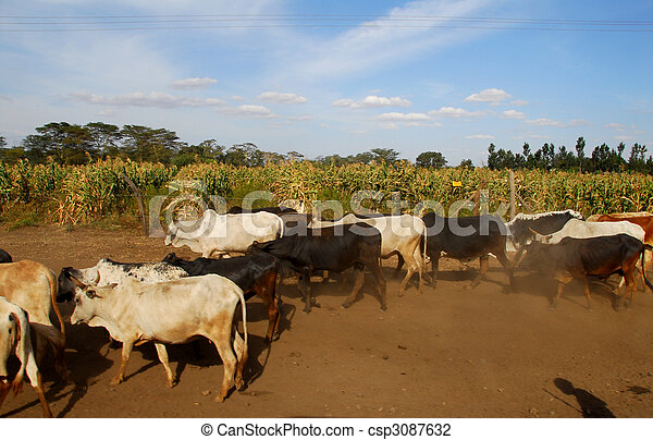 cows - csp3087632
