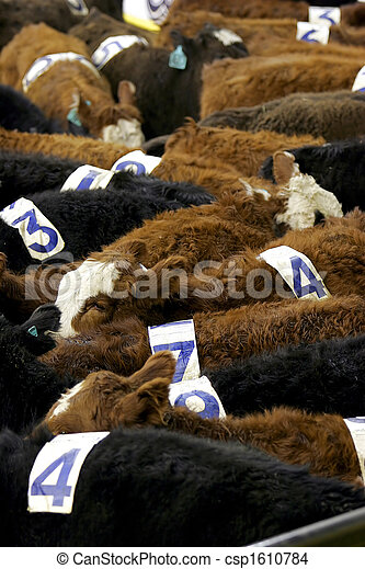 Cows with Numbers - csp1610784