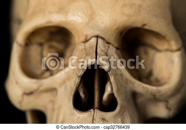 Cráneo humano fotos de archivo - Buscar fotografías e imágenes de ...