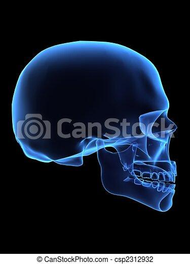 Cráneo humano. Cabeza, rendido, ilustración, ahuman, radiografía, 3d.