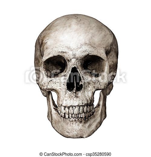 Cráneo humano. Recorte, plano de fondo, cráneo, aislado, negro ...
