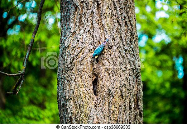 Pájaro en un árbol alimentándose - csp38669303