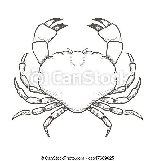 Crab Drawing On White Background. Hand Drawn Outline Seafood Illustration. Crab Drawing On White ...
