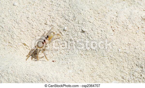 Crab - csp2364707