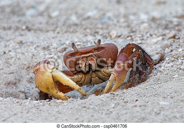 Crab - csp0461706