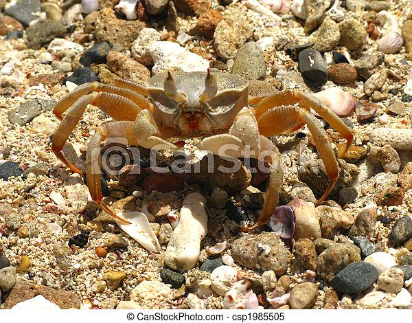 Crab - csp1985505