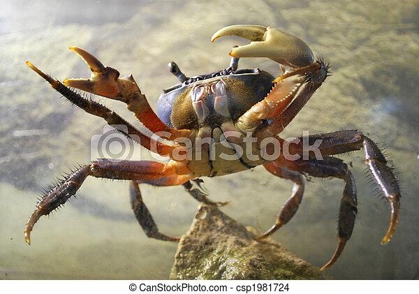 crab - csp1981724