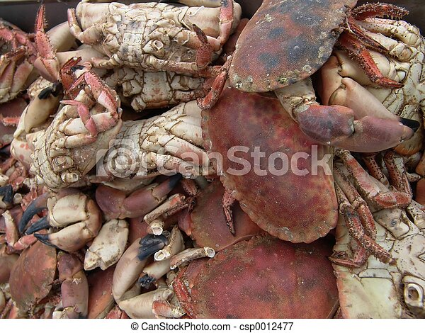 Crabs - csp0012477