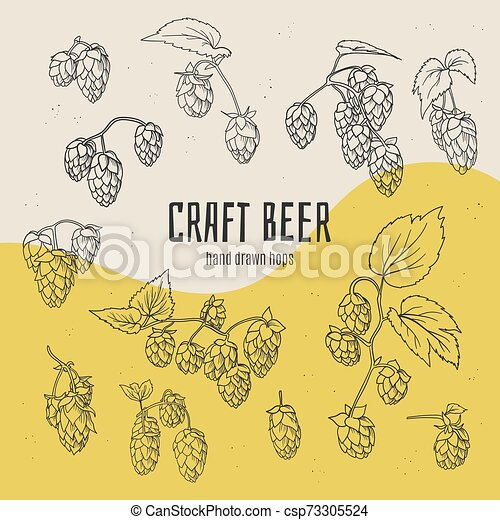 Craft beer hand drawn doodle style hops collection. - csp73305524