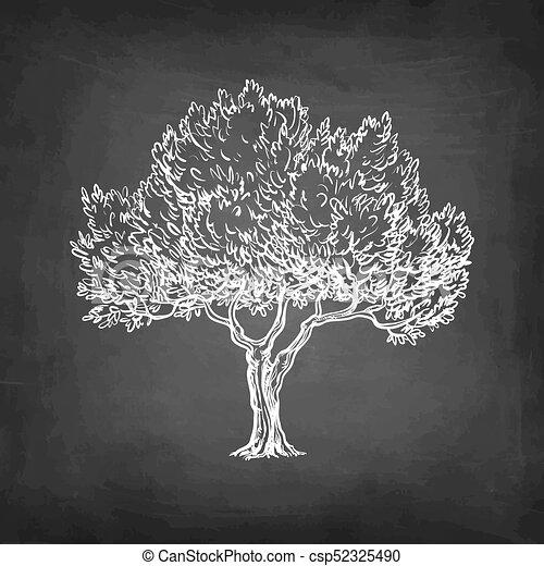Craie olive croquis arbre croquis illustration - Croquis arbre ...