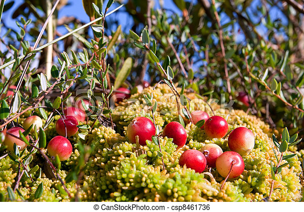 a description of a report on cranberry growing and northland inc Home / careers / current openings you are our future join us and learn the power of innovation the jennie-o culture minimally processed, no artificial ingredients.
