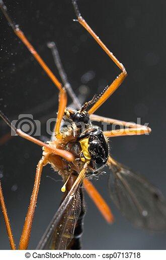 Cranefly Macro - csp0713718