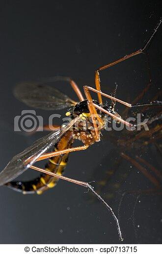 Cranefly Macro - csp0713715