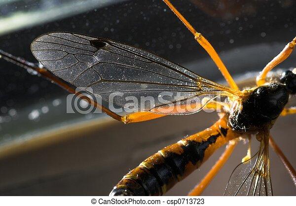 Cranefly Wing Detail - csp0713723