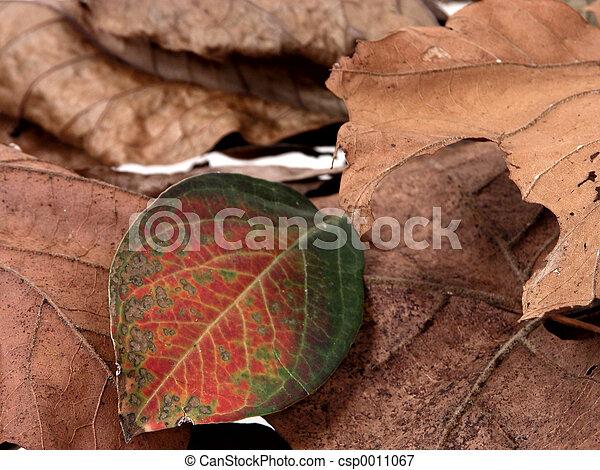 Crape Myrtle Leaf - csp0011067