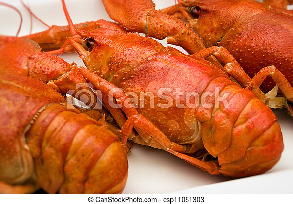 crawfish on a plate - csp11051303