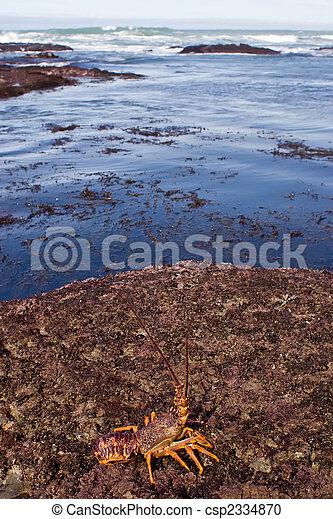 Crayfish 03 - csp2334870